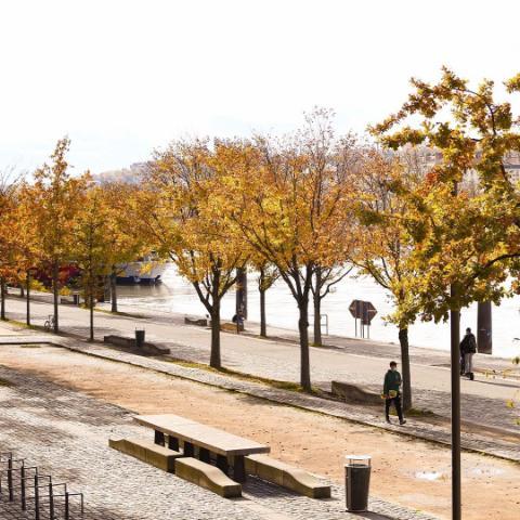 Lyon sous tous les tons 🌞  Les couleurs de l'automne enveloppent doucement la ville.  Les feuilles se parent de tons rouges à orangés 🍂, la lumière réchauffe les allées ✨, tandis que le Rhône et la Saône suivent leurs cours, teintés de reflets.  Un bol d'air frais aux couleurs dorées, au milieu de ce mois d'octobre déjà bien rempli de projets.  Et vous, quelle est votre saison préférée ?  🍂? ☀️ ? ❄️? 🌸 ?  #knvaevents #autumnishere #goldenhours #citylife #ilovelyon #onlylyon #autumnleaves #autumnvibes #autumncolors #quaidesaone #quaiderhone #europetravel #visitfrance #lyomaville #lyonlovers #citytrip #francetourisme #europedestinations